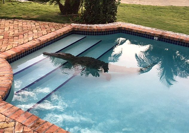 craziest things found in swimming pools
